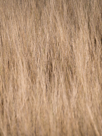 dryed: Dry Light Brown Meadow in Summer