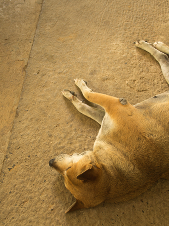 Brown Dog Lying on The Cement Floor