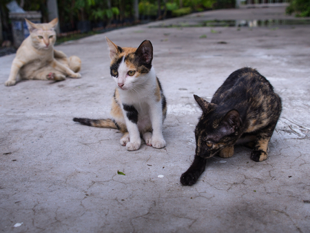 Cats Acted Alert on The Cement Floor Stock Photo
