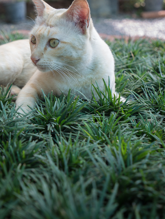 Stray Cat Yellow White Striped Head Notch Standing Stock Photo