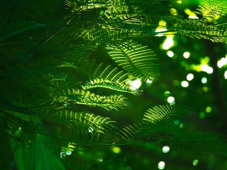 Sponge Tree with Glint on The Leaf