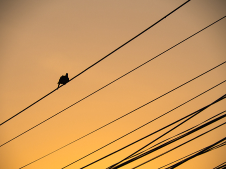 silverline: The Furry Dove on The Wire , Oblique Lines