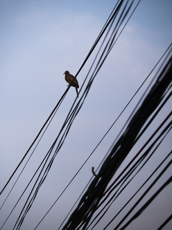 silverline: The Dove Quietly Sleep on The Wire Stock Photo