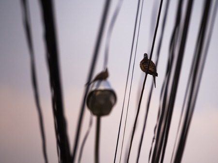 silverline: The Dove Perched on a Wire After Rain