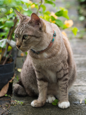 shiver: The Tabby Cat Sitting in The Garden