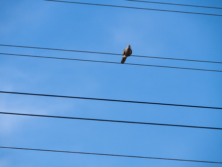 The Dove Necklings Listen to Some Noise on The Oblique Wire