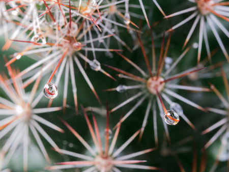 Rain Drop on The Tip of The Torn of Cactus Stock Photo