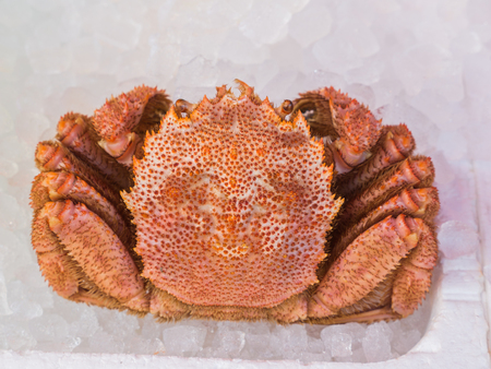The Orange Giant Crab on Ice in The Fish Shop