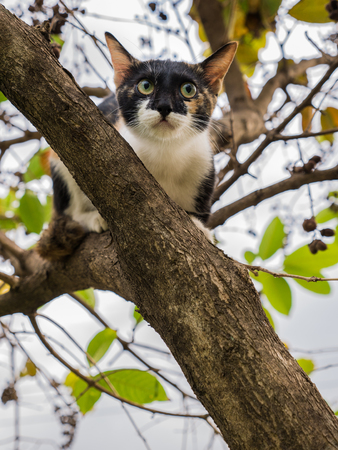 Three-Colored Kitten Escape Another Cat up The Tree Banco de Imagens