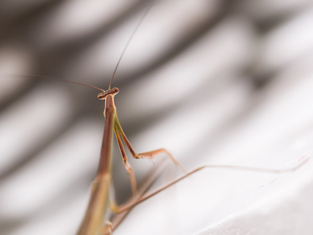 The Long Grasshopper Body in The White Striped Background in The Garden Banco de Imagens