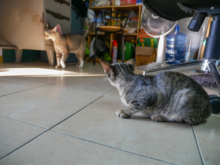 The Stray Tabby Kitty Breaking into The Room of The Large Cat
