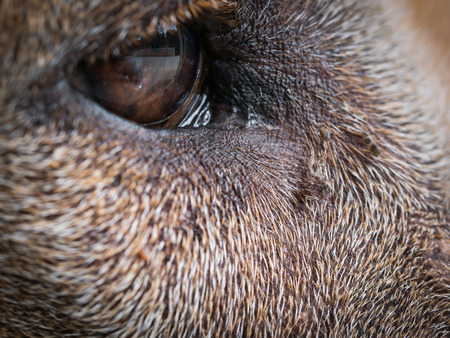 The Expression Eye of The Brown Dog,Taking Macro