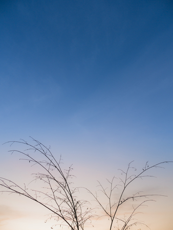 The Dry Twigs Against The Sky