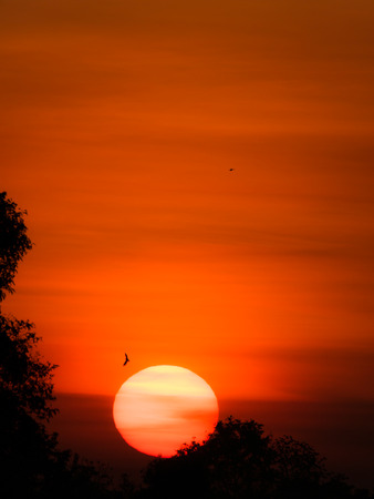 The Yellow Sun Rising from The Forest in The Red Sky Background