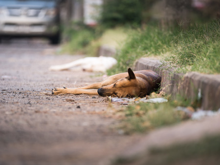 The Stray Dogs Lying beside a Road
