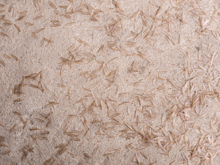 The Insect Wings Spread Termites on The Floor after Mating