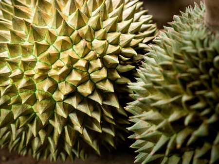 The Durians Fruit on The Ground