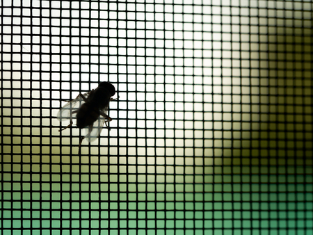 The Fly Perched on The Mosquito Screen in The Window Frame