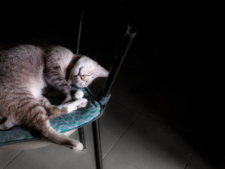 The Tabby Cat Sleeping on The Chair at The Room with The Light Through a Channel