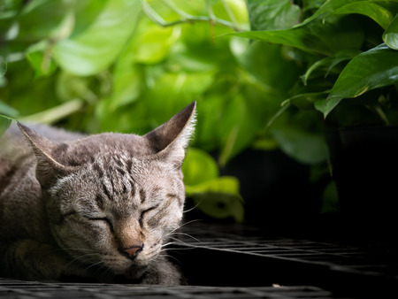 The Brown Cat Lying in The Garden