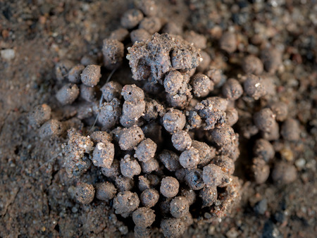 ThePile of Sandy Soil Resulting from Earthworm