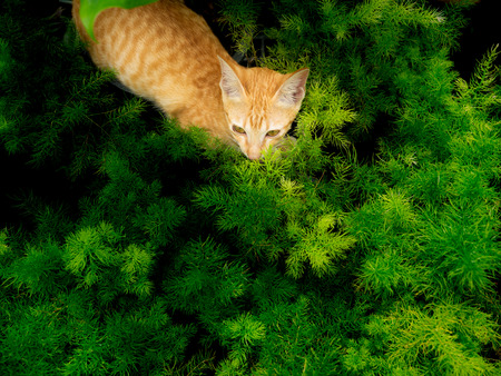 The Yellow Kitty Lying in The Green Leaves in The Garden