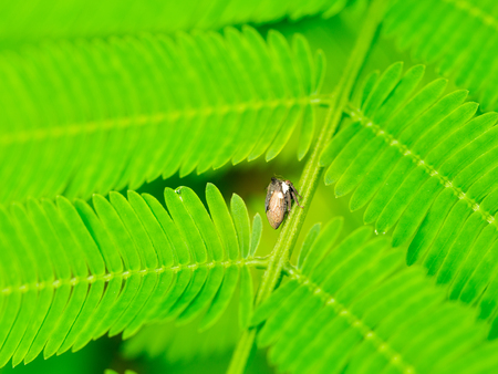 The Insect Perched on The Climbing Wattle in The Garden