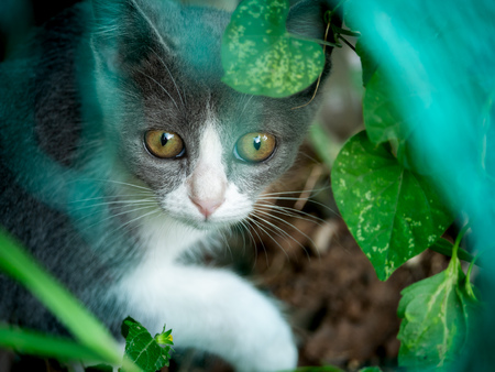 The Gray Kitten Hiding in The Garden on The Ground