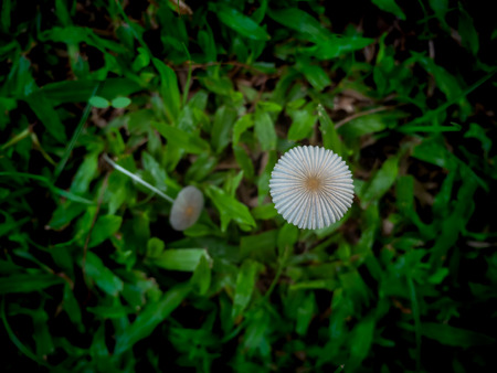 The Mushroom Growing on The Lawn in The Garden Фото со стока