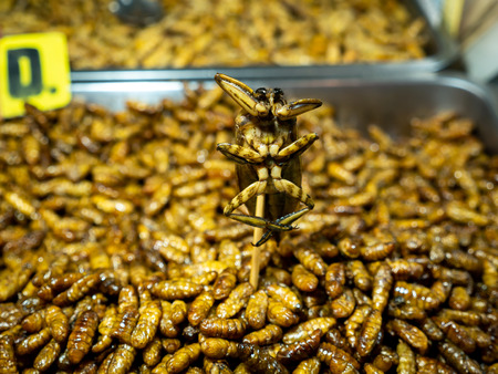 The Giant Water Bug was Fry Standing among The Worms Fried in the Tray in The Night Market Thailand , 20 is The Price