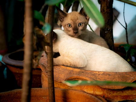 Two Kittens Playing in The Plant Pot in The Garden Imagens