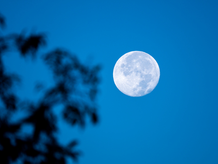 The Moon Appears in The Daytime during in the Late Afternoon , A Blur Branch in The Foreground