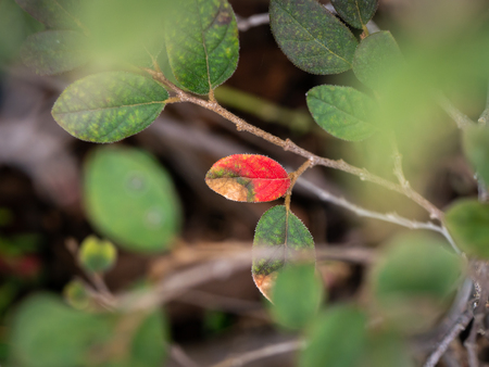 The One Red Leaf in The Garden