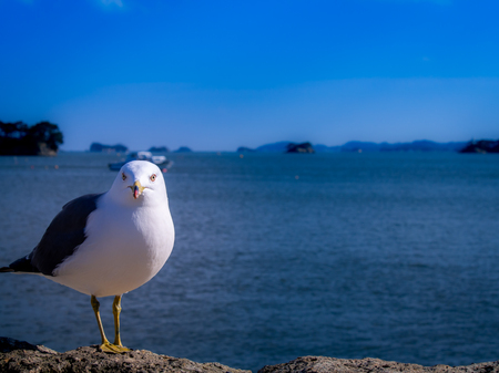 The Seagull Standing Calmly on a Rock near The Sea
