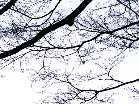 The Pattern of  Silhouette Tree without Leaves Standing in The Open Space