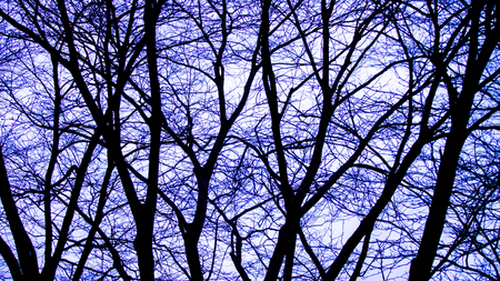 The Pattern of Blue Silhouette Tree without Leaves Standing in The Forest