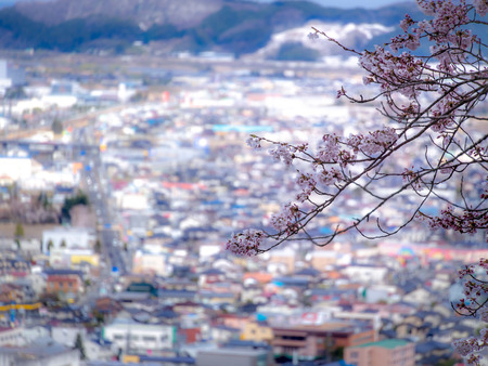 The Bouquet of Sakura Flowers Blooming on The Field without Leaves behind The Town in The Mountain Imagens