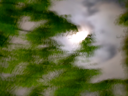 Blur Abstract of The Moon and Tree in The Night