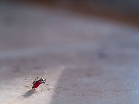 The Mosquito Full of Blood could not Fly ,Standing on The Floor
