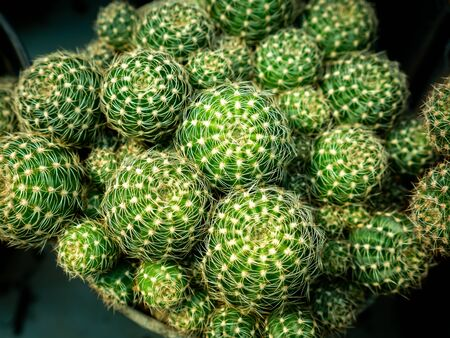 The Green Cactus Tree Stacked in The Farm