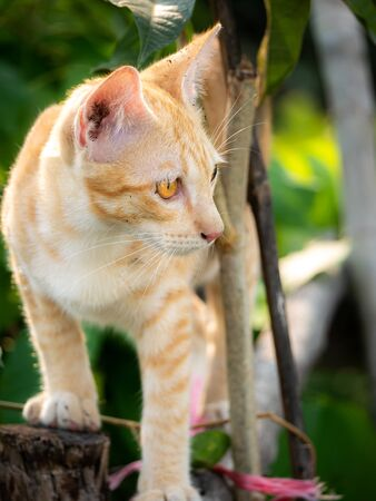 The Yellow Kitten Climbing in The The Garden Imagens