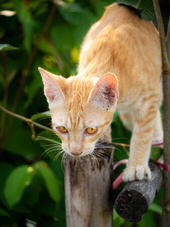 The Yellow Kitten Climbing in The  The Garden