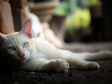 The White Yellow Kitten Lying on The Ground in The Garden Stock fotó