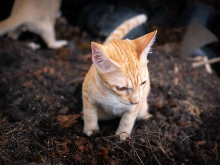 The Yellow Kitty Feces on a Pile of Soil