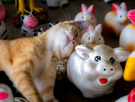 The Yellow White Kitty Sleeping Happily in The Doll Shop