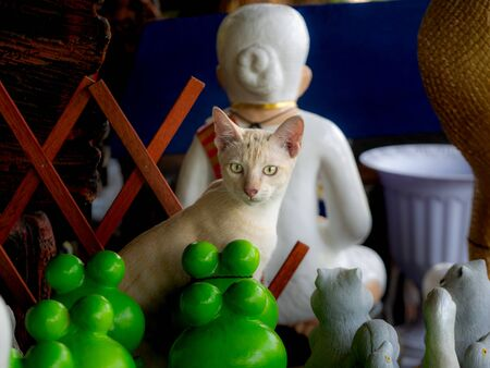 The Yellow White Kitten Standing in The Doll Shop