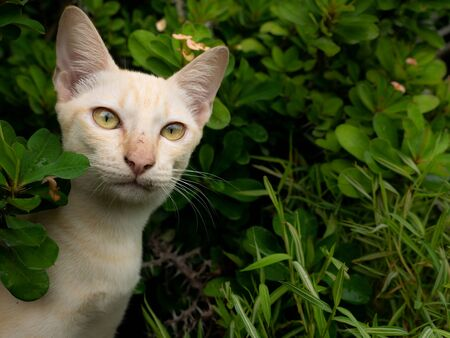 The Naughty Yellow Kitten Looking for a Bamboo Herb for Cats in The Garden