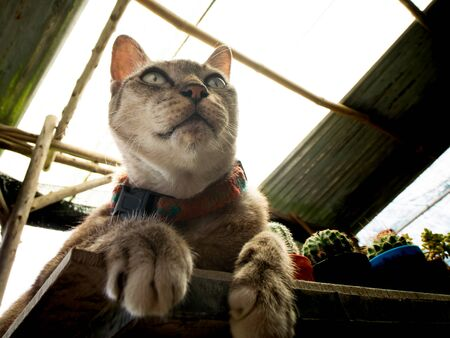 The Tabby Cat Sitting on The Cactus Table, Ant Eye View