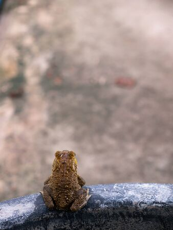 The Toad on The Edge of The Tub,Preparing to Jump