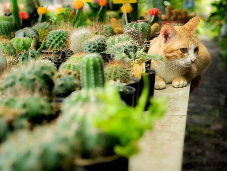 The Yellow Cat Sitting and Turn The Right Peacefully on The Cactus Table in The Tree Shop
